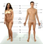 Γυμνός άνθρωπος
